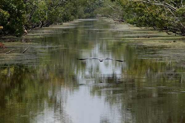 Things To Do in New Orleans Without Drinking: Swamp Tours